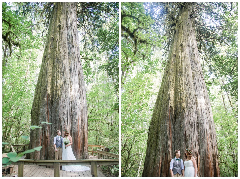 lesbian wedding couple pose for wedding photos in front of a massive old growth tree